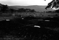 IFP mass graves, South Africal, 1993