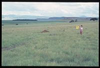 111/81 looking south south west [Farm Erasmus Dam 1050 ? ' 1.5km north north east of Glenora & 1km up i.e. west from Winterton/Gourton Road]. Grid Square may be 2929BA