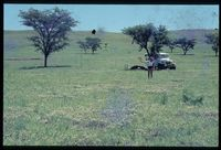 113/81 [Farm River View - Stockhill - ' 100m west of Sterkspruit]