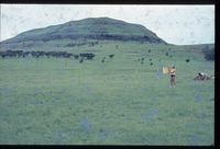 121/81. Looking south onto northern slopes of Nkunzana [Zunkels - Rietvallei - ' 150m from road & at u. foot of Nkunzane]